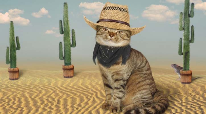Cat Cowboy in desert